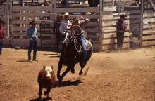 Cow Country Rodeo
