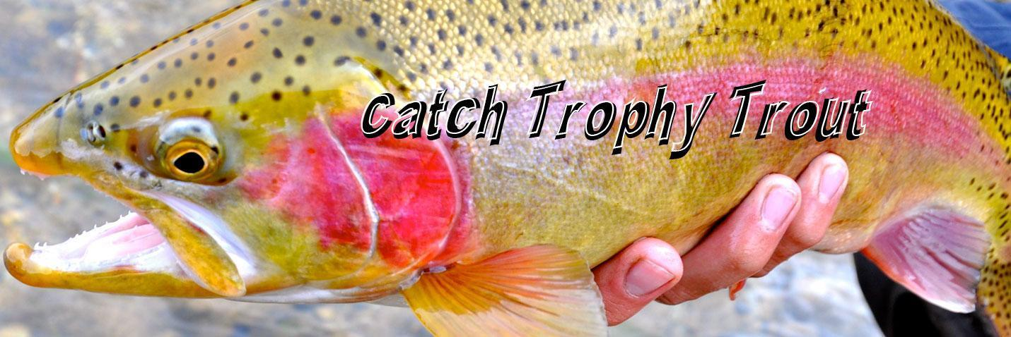 Explore our diverse trophy waters