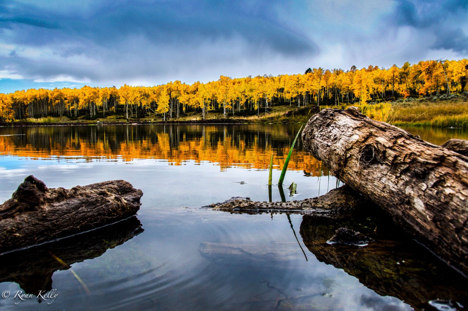 Fall colors - Flaming Gorge Uintas Scenic byway