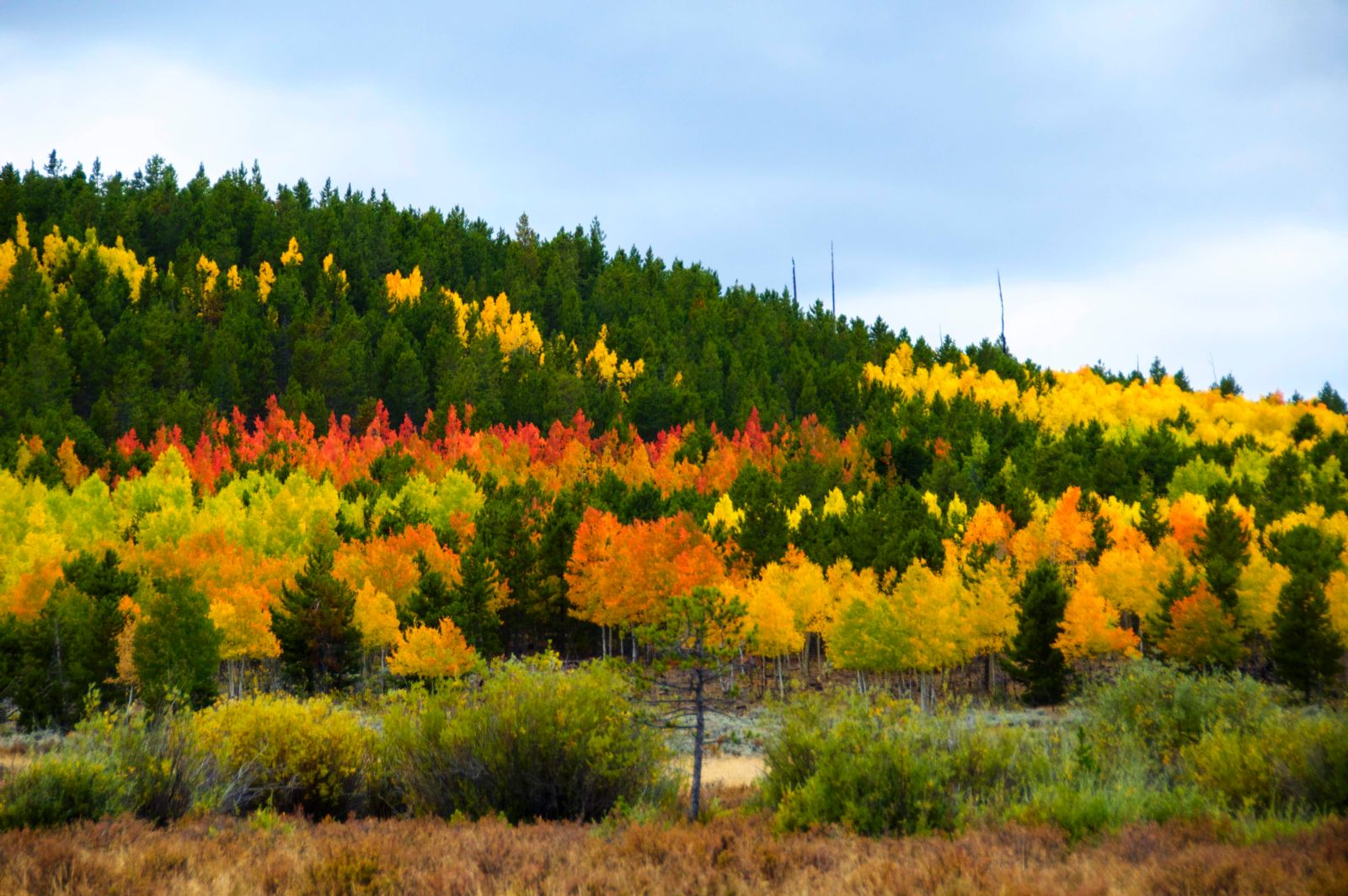 Fall Colors Flaming Gorge