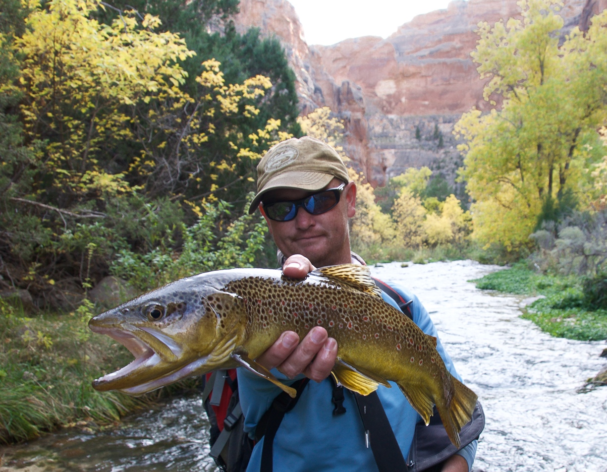 Brown Trout - Dinosaur National Monument